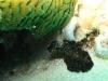 121206_plattworm