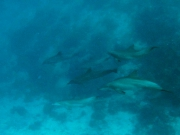 140413-dolphins