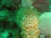 130119_cuttlefish