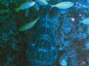 130429_grouper